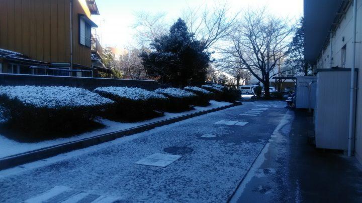 雪が降りました! ⛄