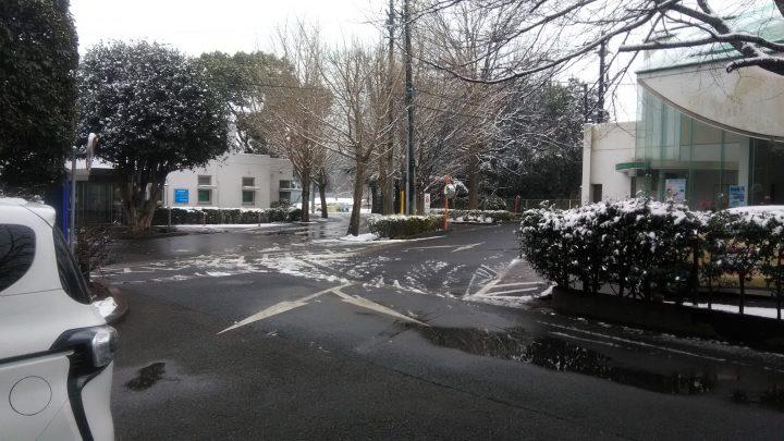 今日も雪が降りました! ⛄⛄