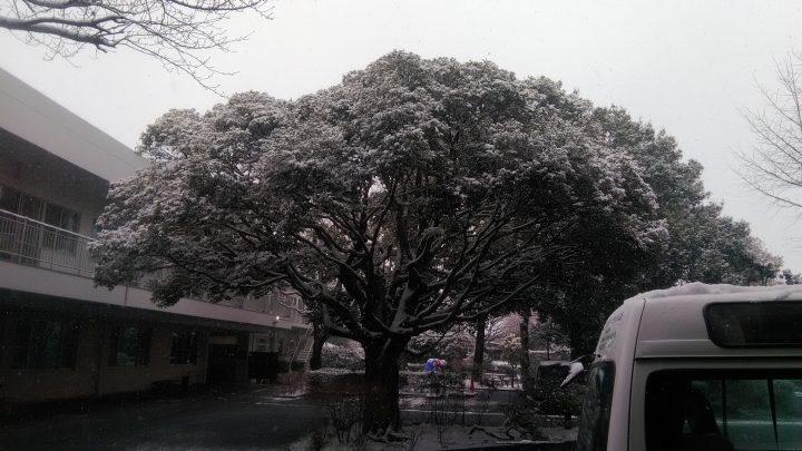 またまた雪が降りました! ⛄⛄⛄