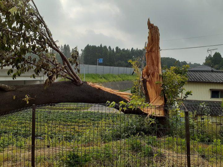 台風15号による影響 🌀