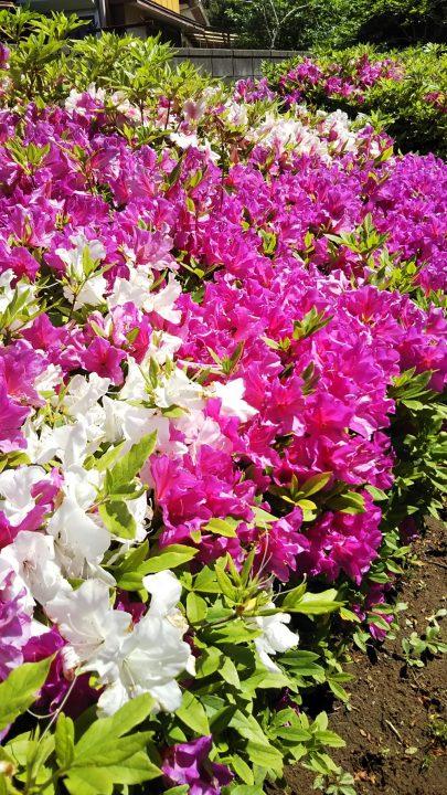 🌸 総和苑の庭散歩 👟👟