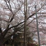 🌸春爛漫♬🌸